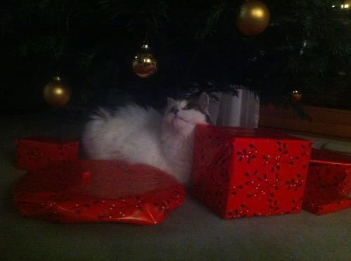 Leni unterm Weihnachtsbaum